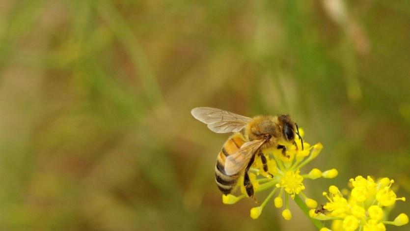 المسلم كالنحلة