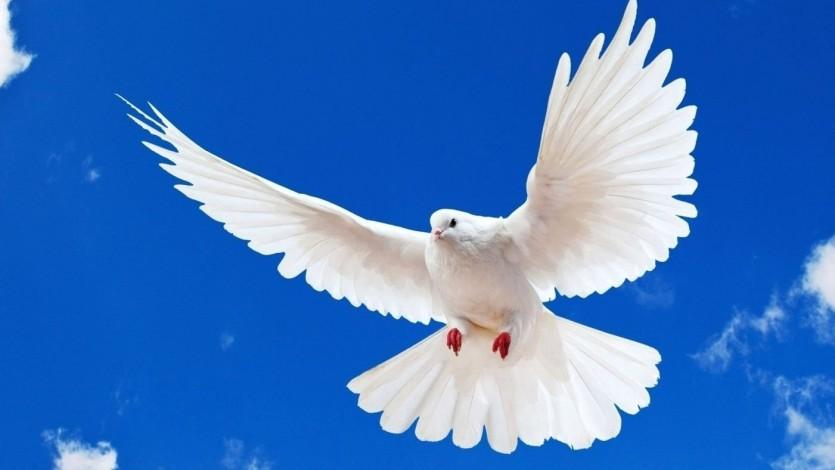 الإسلام والحرية